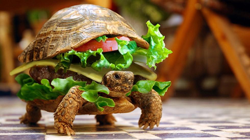turtle-burger-l.jpg